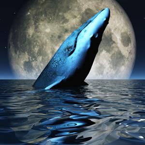 ゲーム,青い鯨